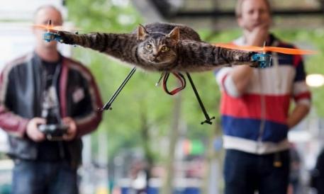 El arte de hacer volar a un gato