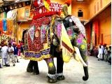 ¿Es verdad que los elefantes tienen buena memoria?